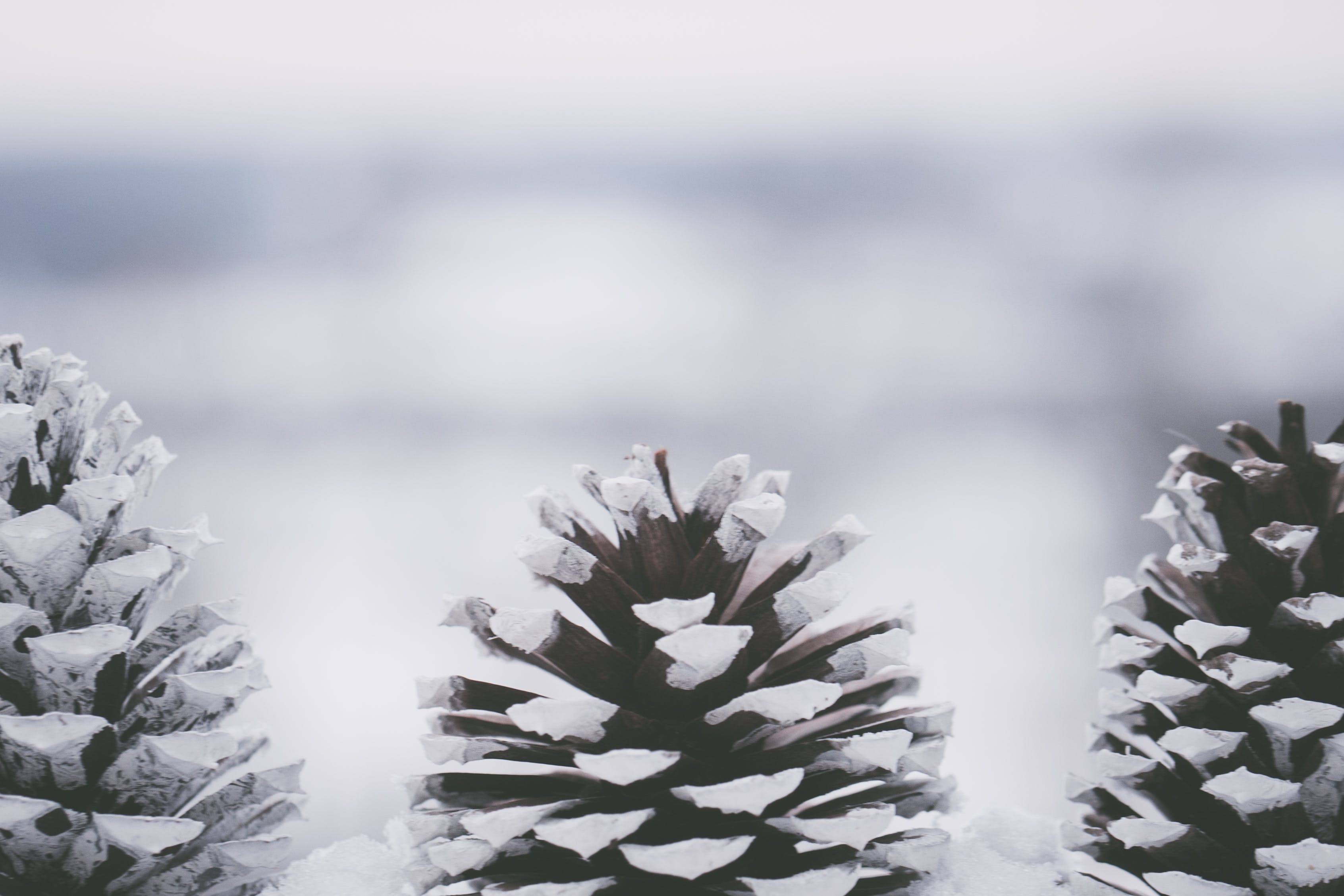 Close-up Photography Of Pine Cones
