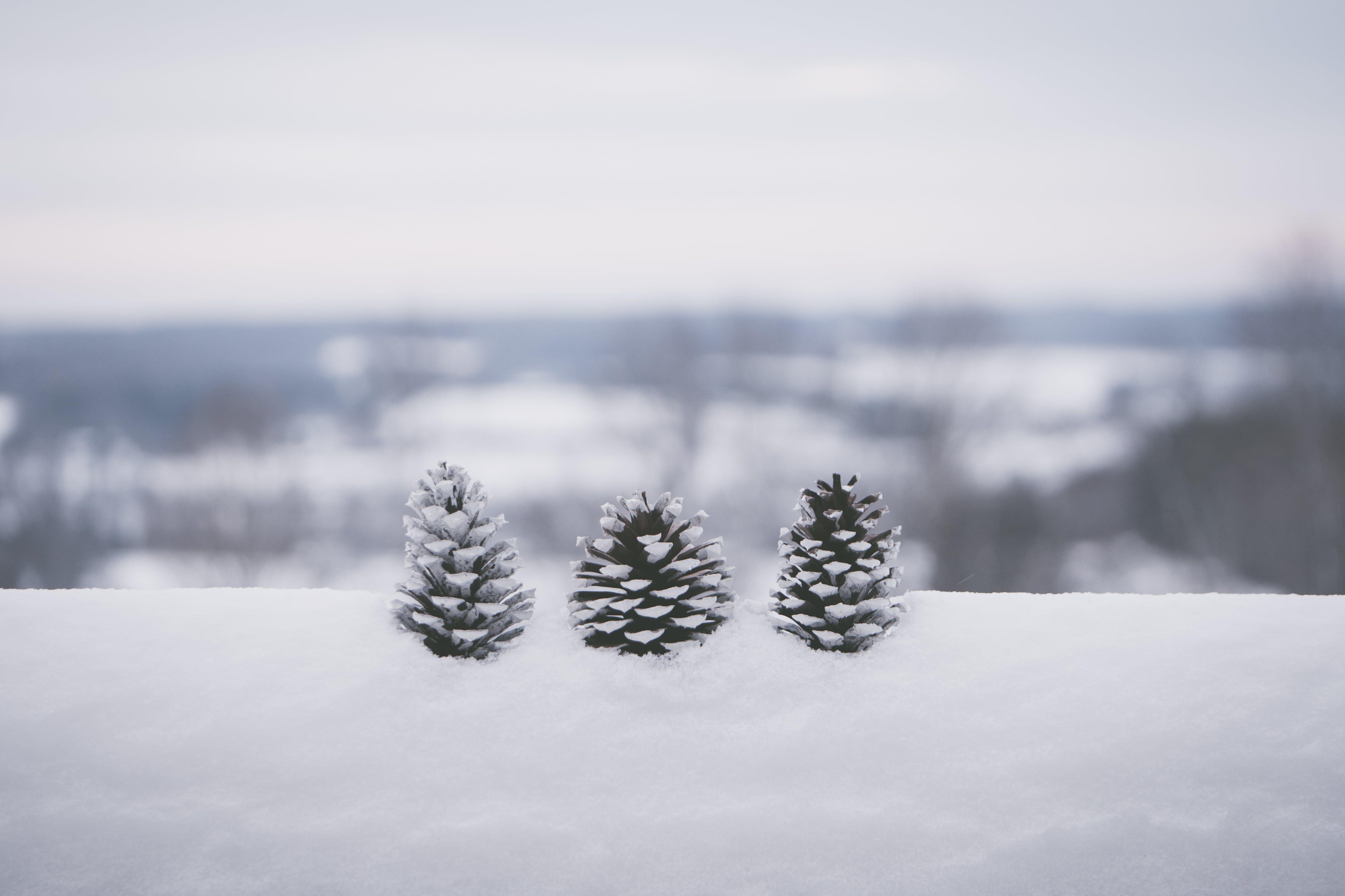 Selective Focus Photography Of Three Pine Cones