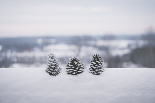 Selective Focus Photography Of Three Pine Cones