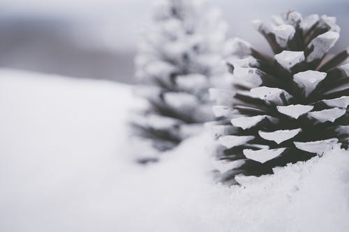Close-up Photography Of Snow Capped Pinecones