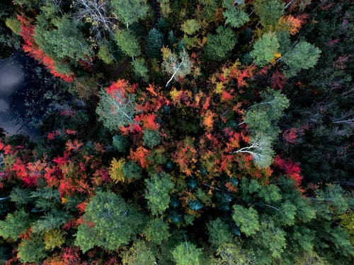 공중 촬영, 나무, 숲, 위에서의 무료 스톡 사진
