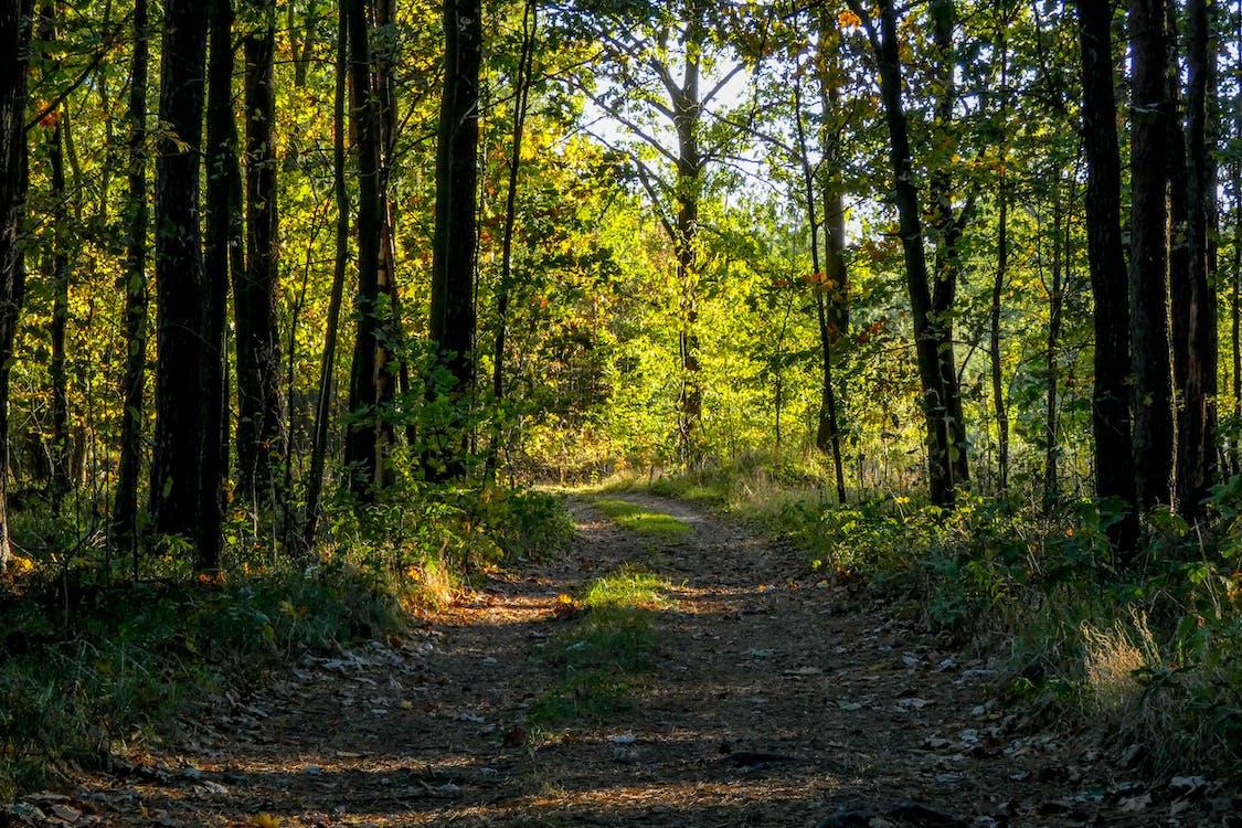 metsä, metsätiellä, tie
