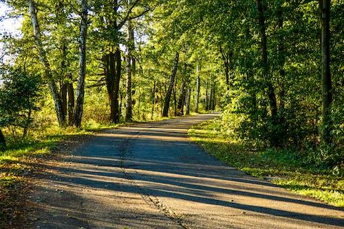 Kostnadsfri bild av högersväng, skog