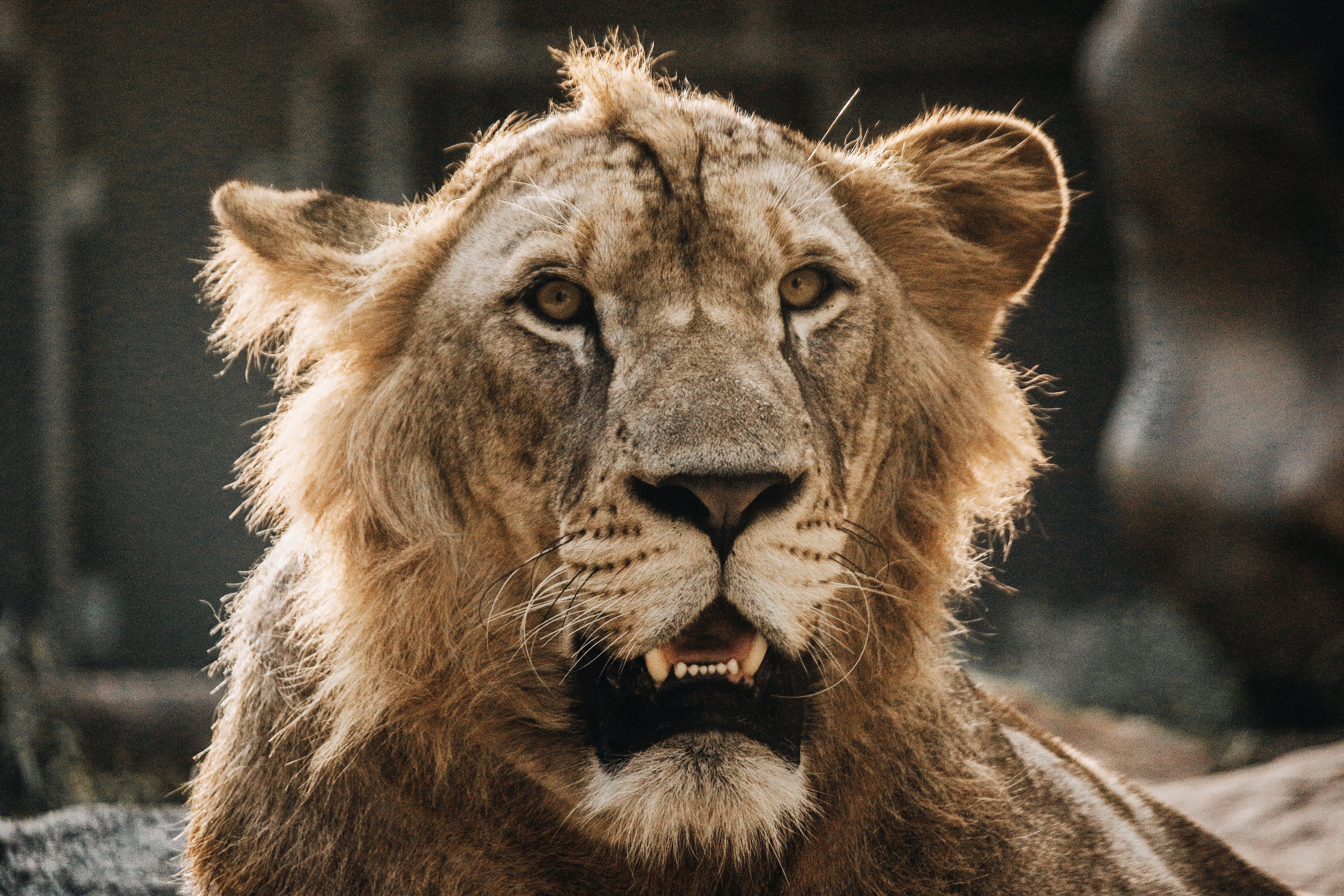 Kostnadsfri bild av djur, djurpark, kanon, kärlek
