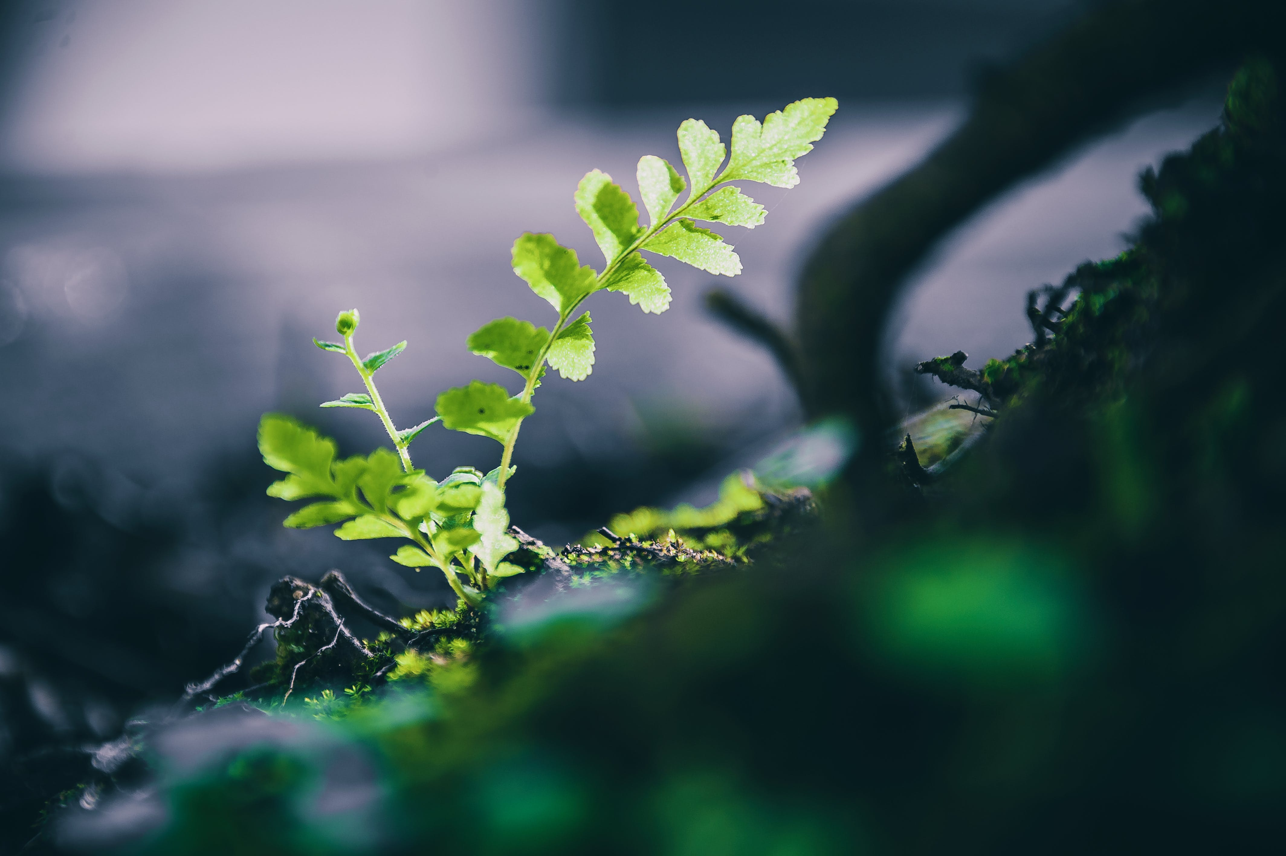 Macro Photo Of Green Leafed Plant