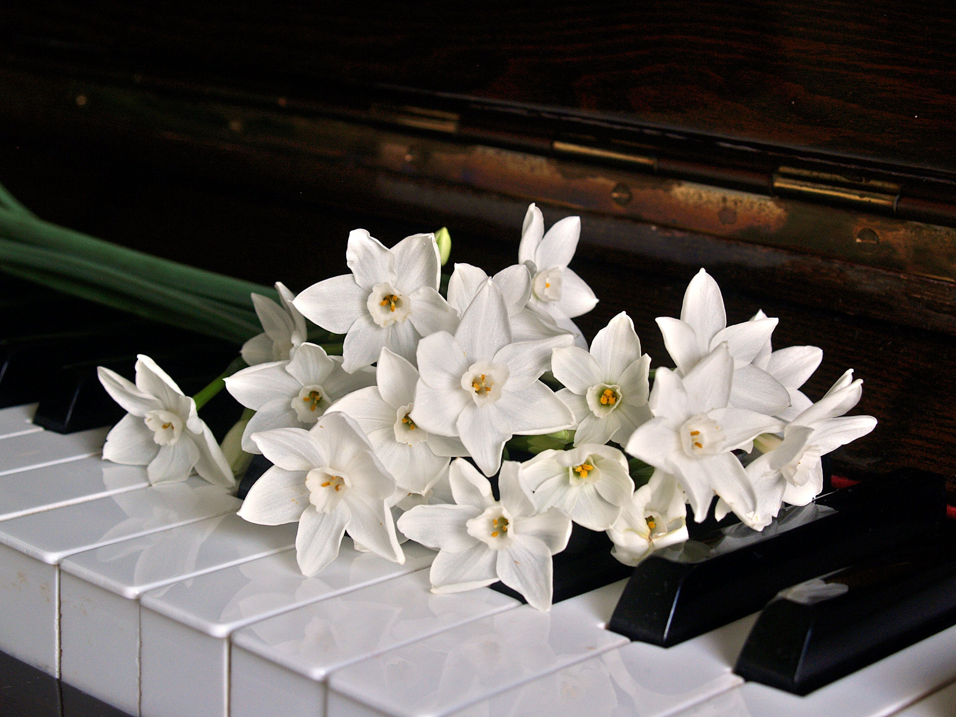 White Orchid on Brown Wooden Piano