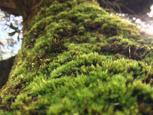 Gratis stockfoto met boom, groen, olijfboom