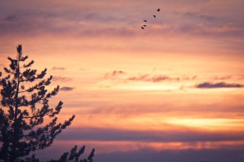 コールド, 地球, 太陽, 日の出の無料の写真素材