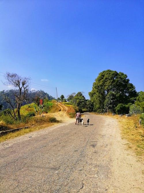 Δωρεάν στοκ φωτογραφιών με αγρότης, Ασία, ασιάτης, γίδες