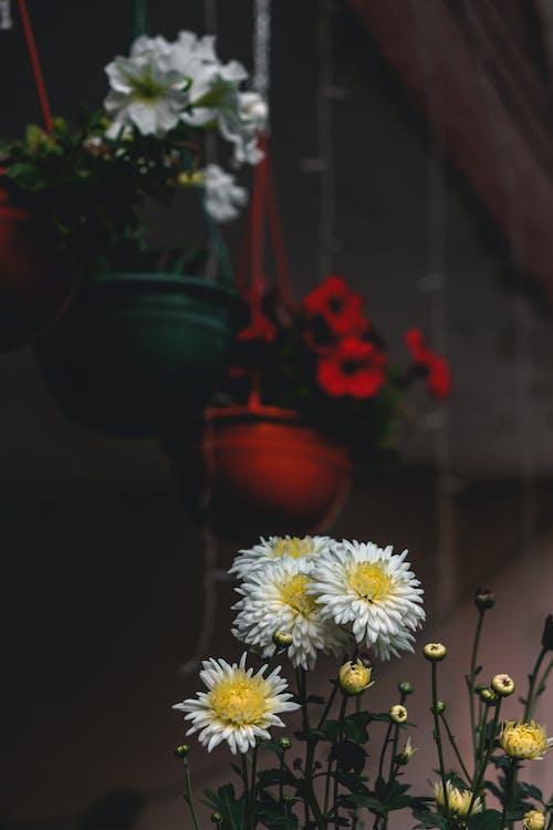 Безкоштовне стокове фото на тему «завод, квіти, макрофотографія, пелюстки»