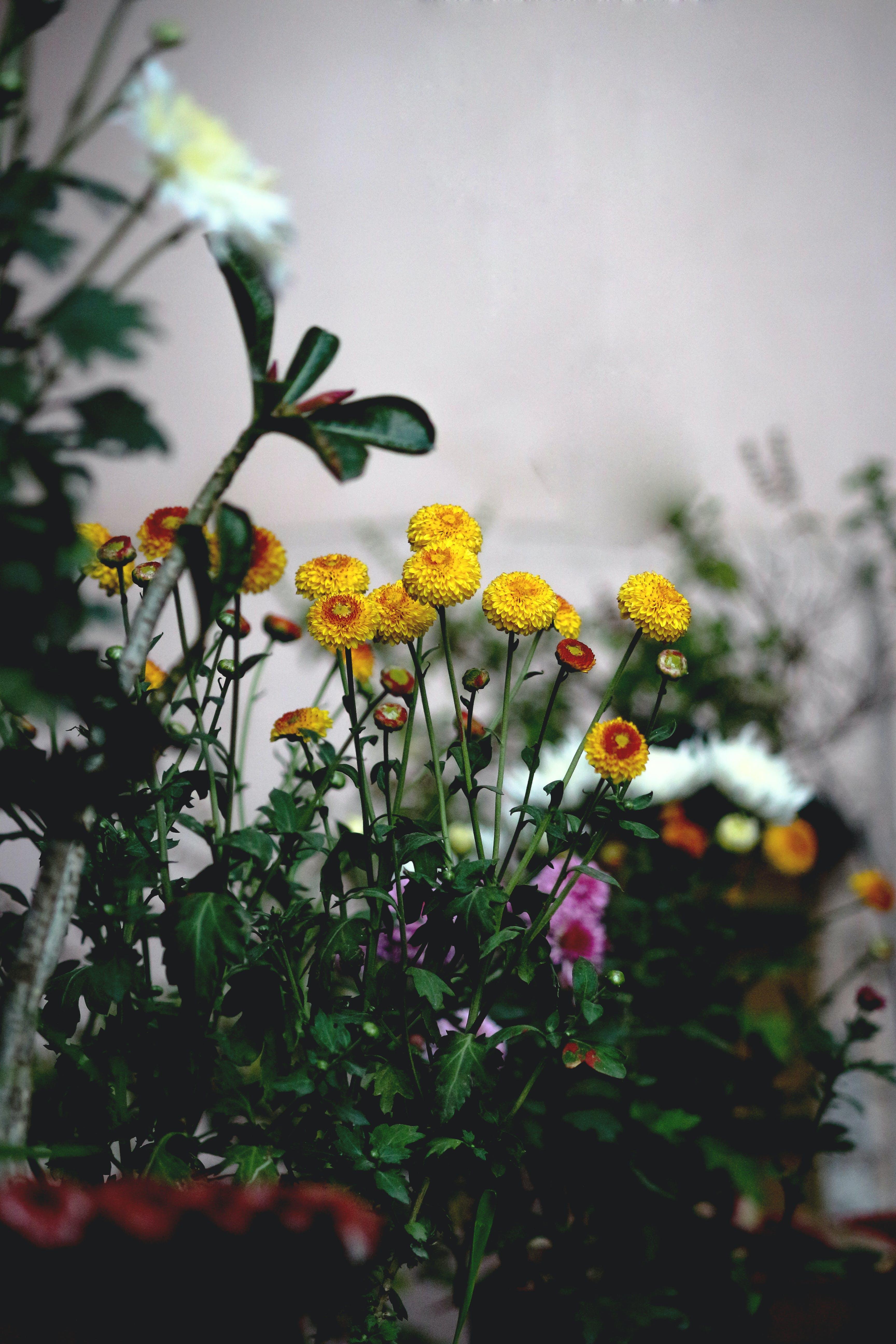Gratis lagerfoto af blomster, blomstrende, delikat, dybde