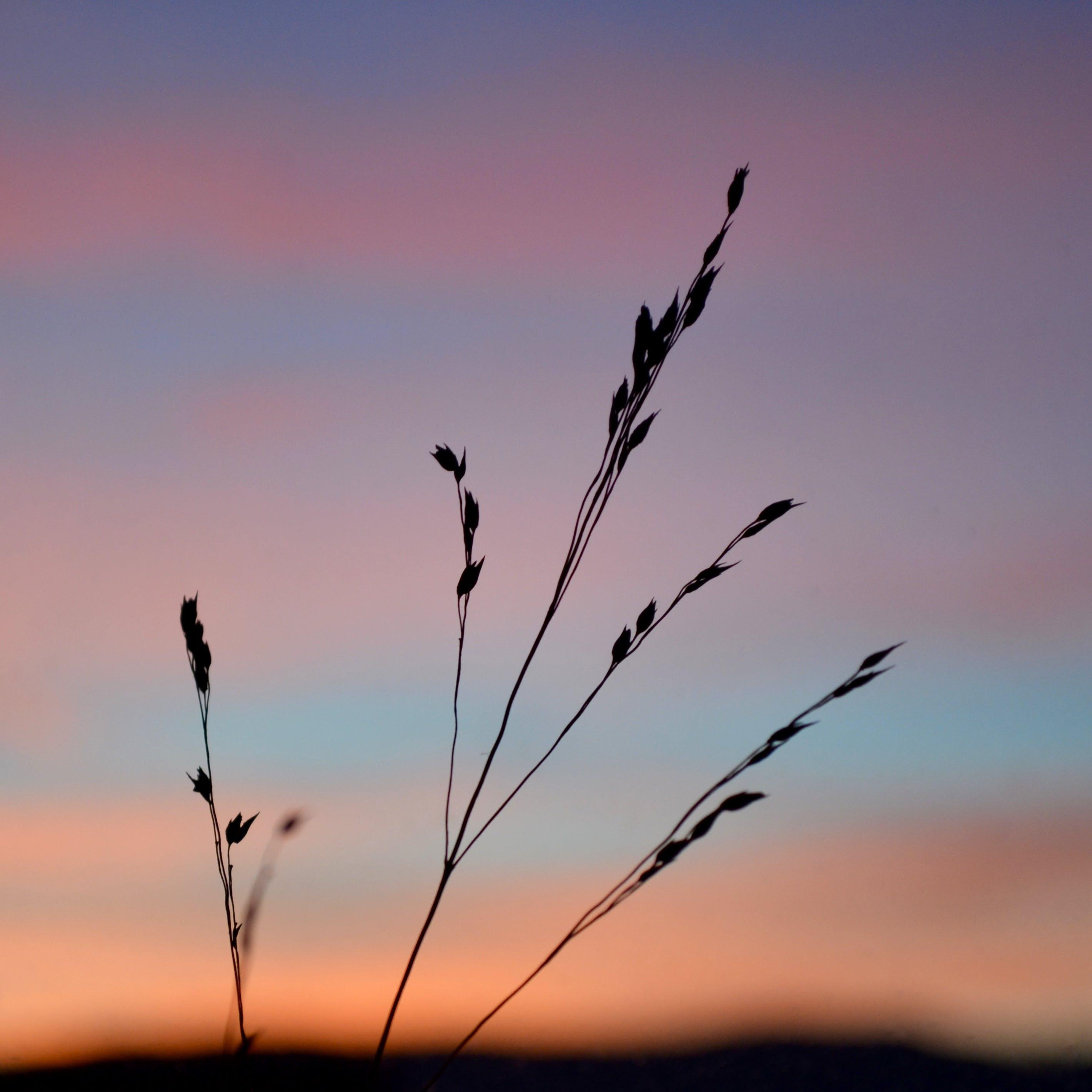 Gratis lagerfoto af himmel, korn, solnedgang