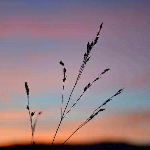 Foto d'estoc gratuïta de capvespre, cel, gra, posta de sol
