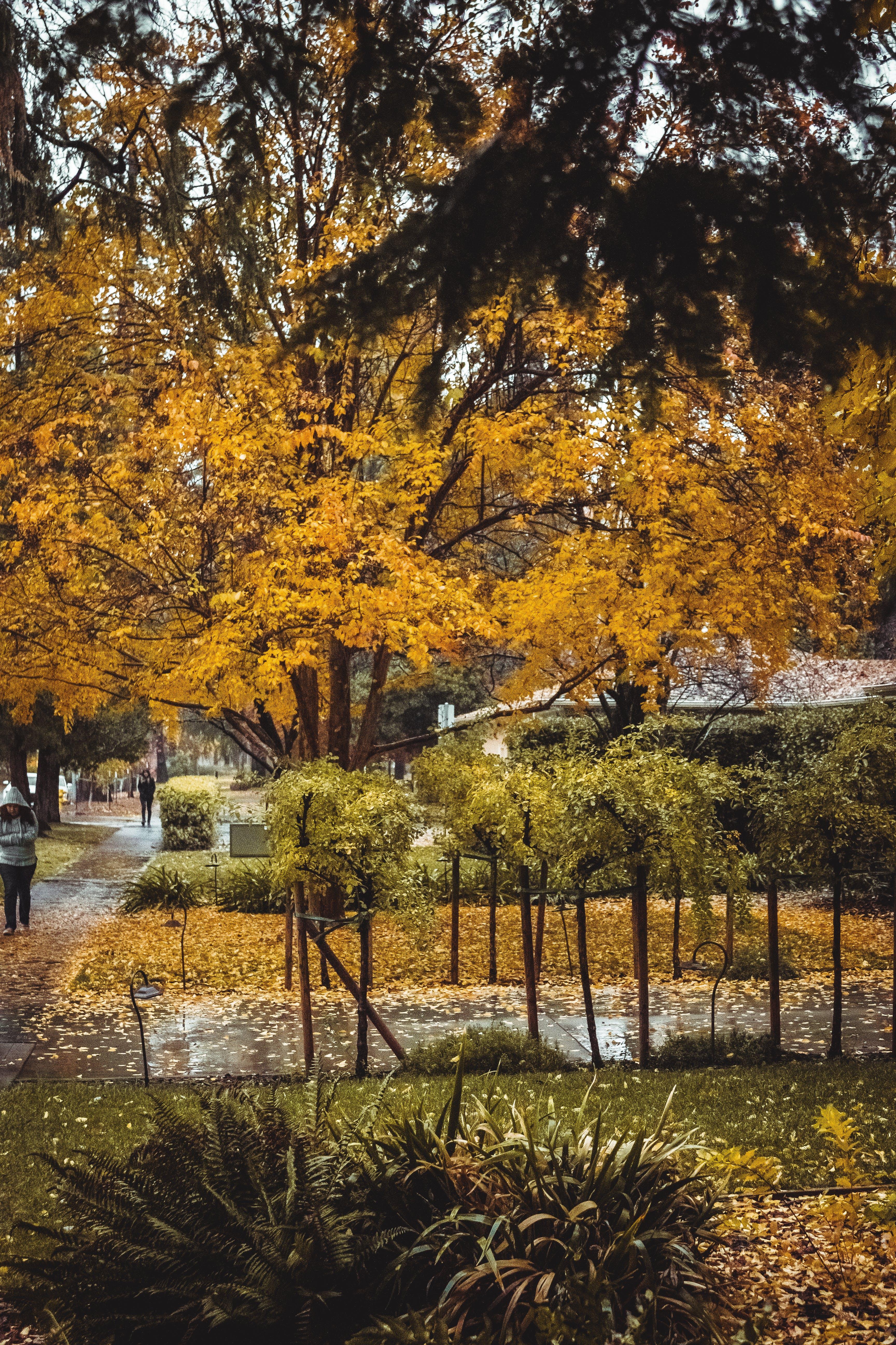 Ilmainen kuvapankkikuva tunnisteilla etupiha, jalkakäytävä, oksat, puut
