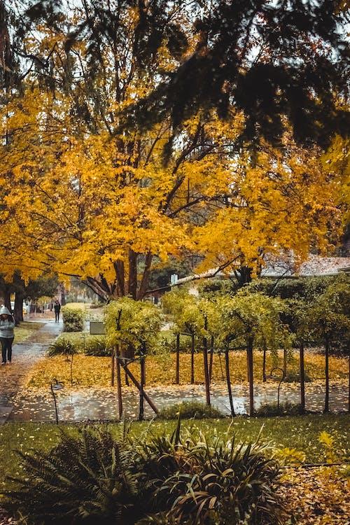 Photos gratuites de arbres, branches, couleurs automnales, cour