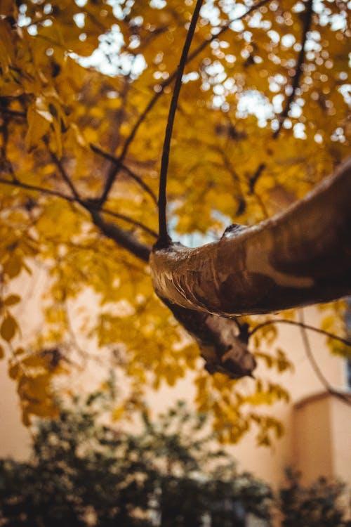 Photos gratuites de branche, branches, couleurs automnales, membre