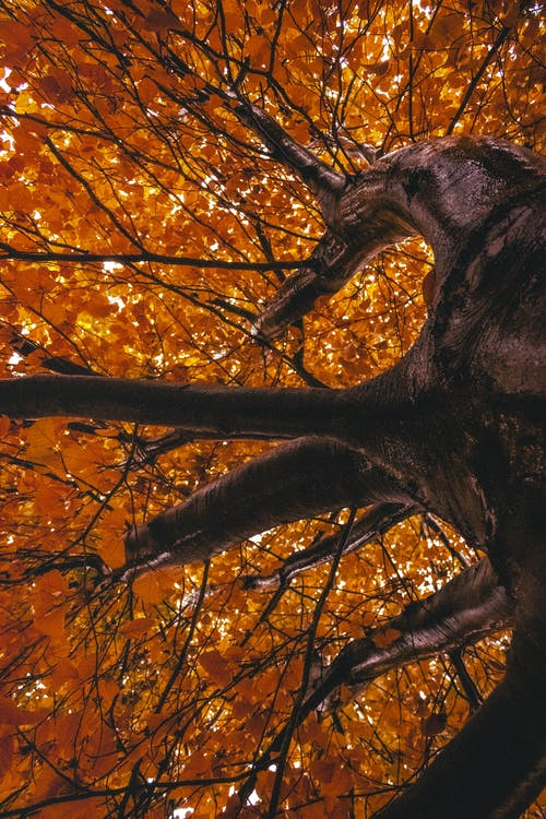 Photos gratuites de aboiement, arbre, bois, branches