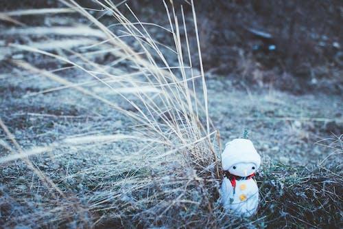 Gratis stockfoto met blurry achtergrond, close-up, gras, jong