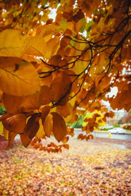 ağaç, chico, güz renkleri, kaldırım içeren Ücretsiz stok fotoğraf