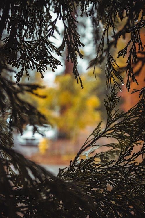 คลังภาพถ่ายฟรี ของ กิ่ง, ต้นไม้, เปียก