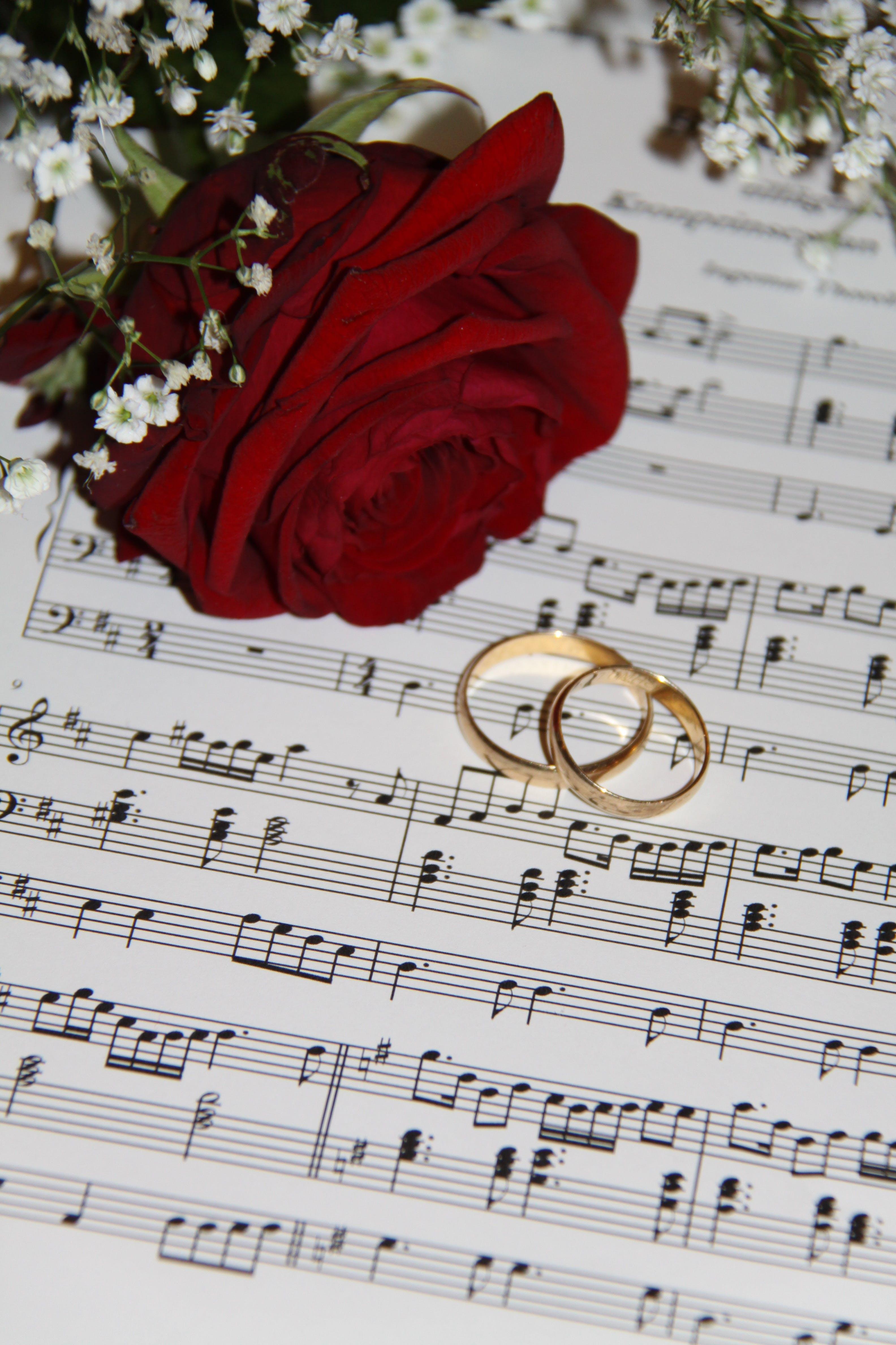 alianças, amor, anéis de casamento