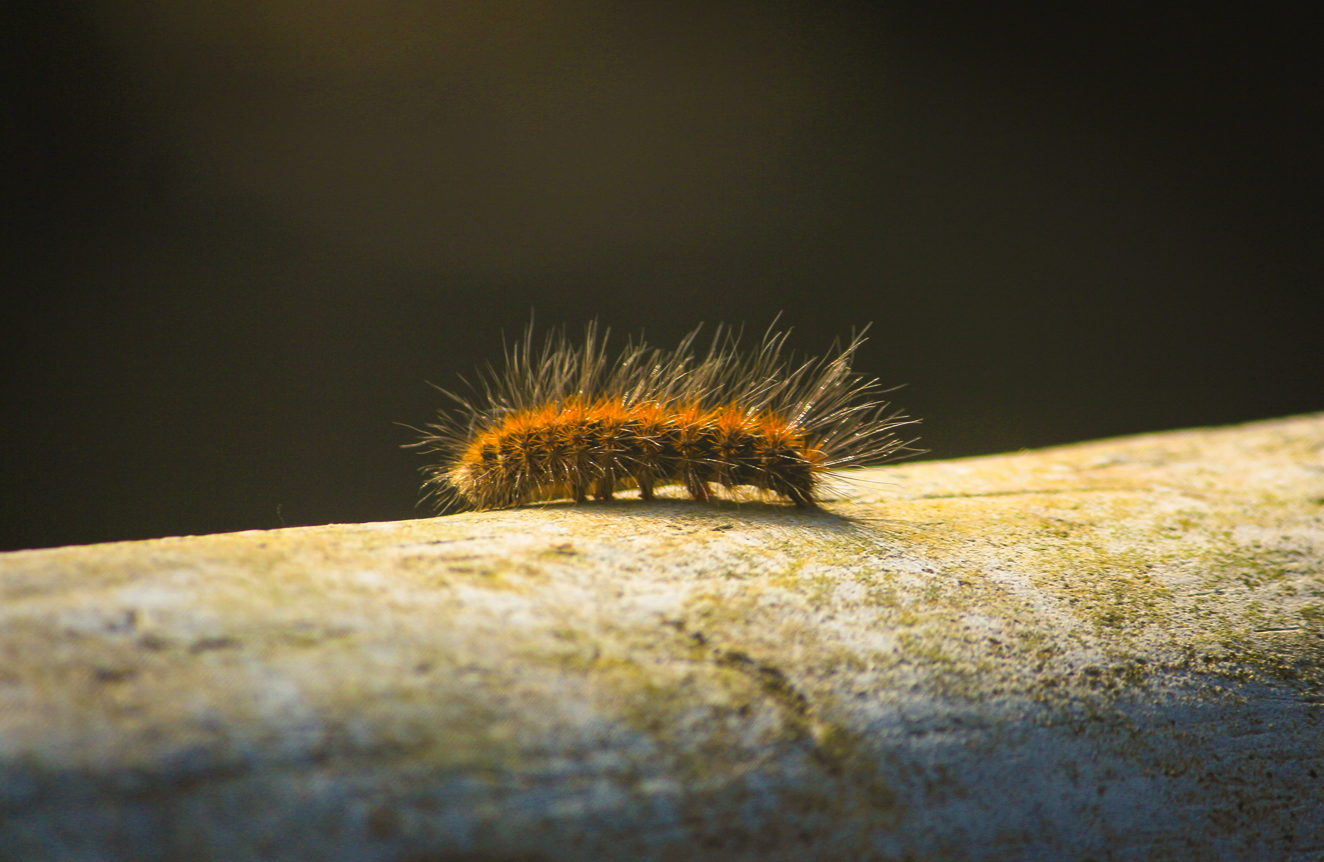 Photo Of Caterpillar