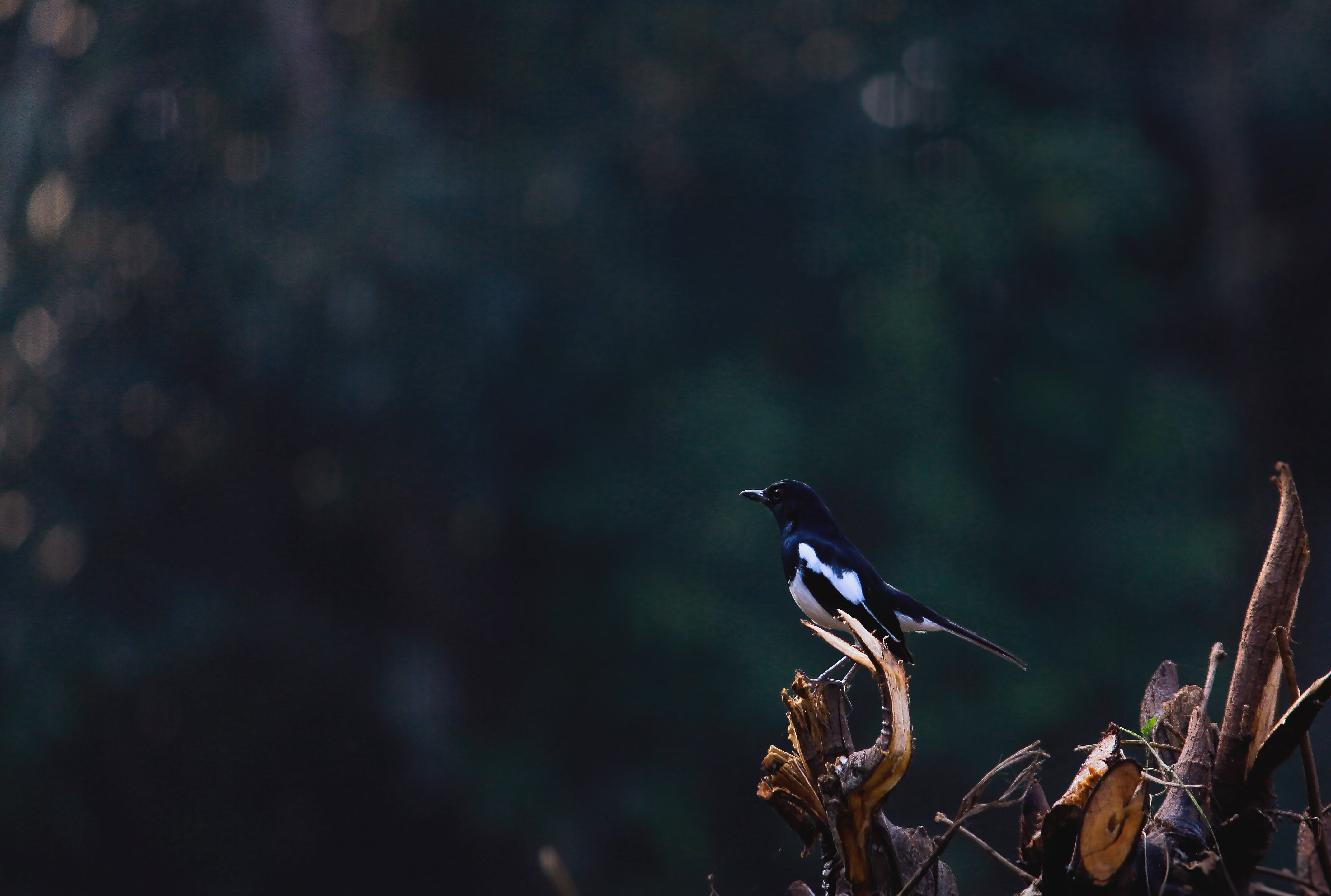 Black And White Bird Perched On Branch