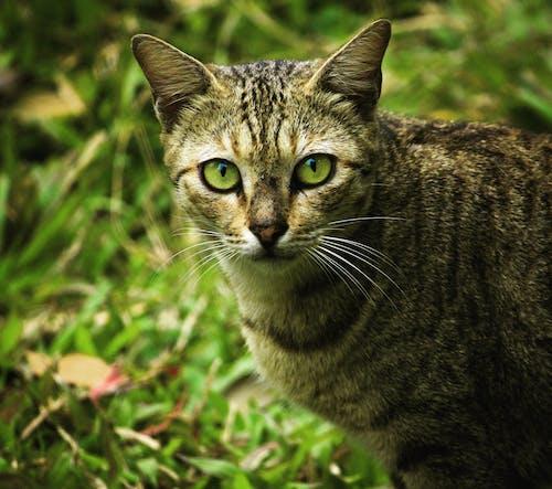 hayvanlar, kedi içeren Ücretsiz stok fotoğraf
