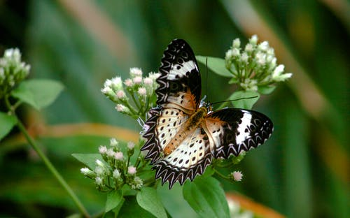 kelebek içeren Ücretsiz stok fotoğraf