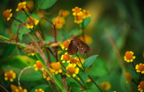 Çiçekler, kelebek içeren Ücretsiz stok fotoğraf