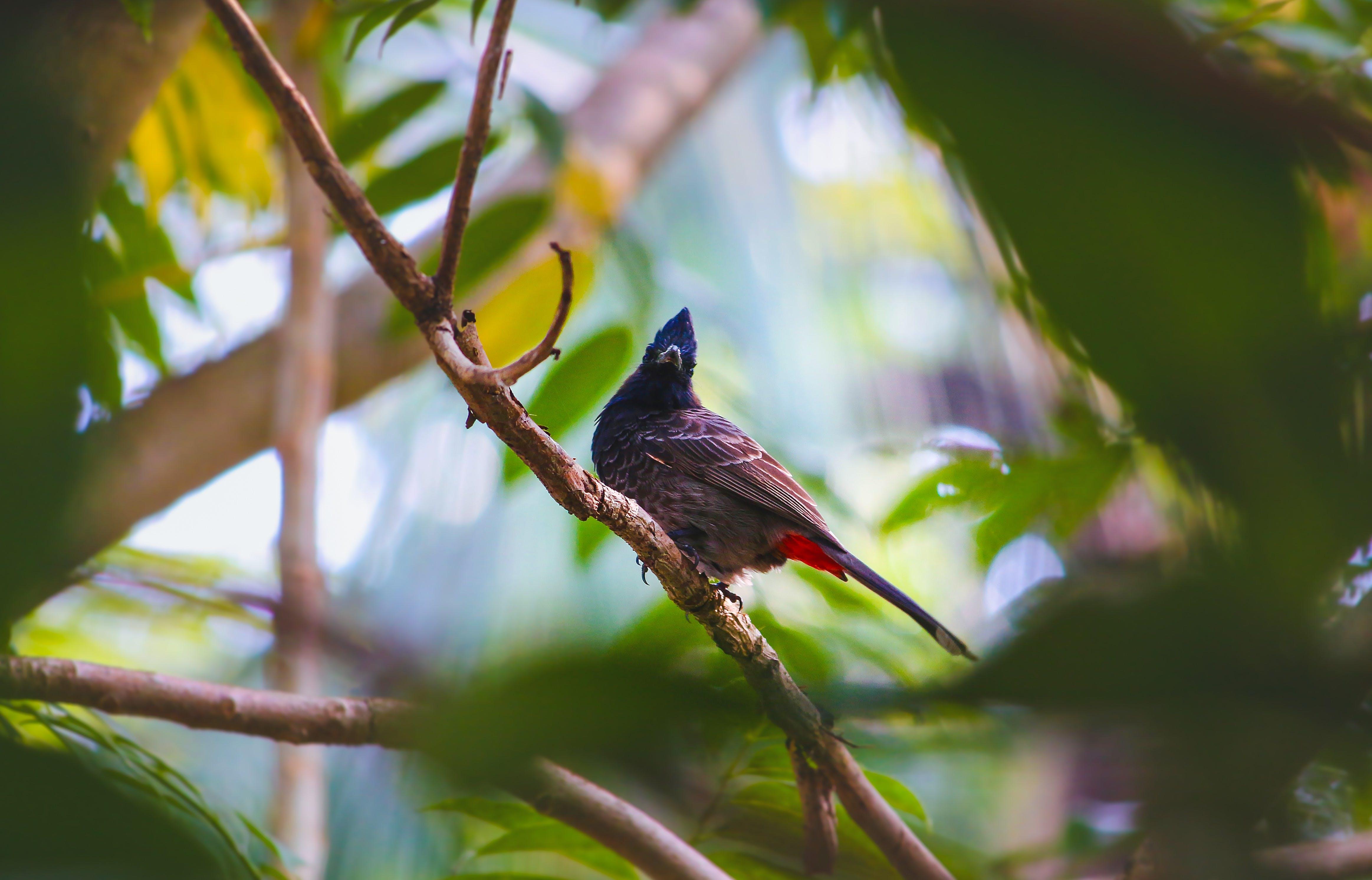 Bird Resting On Tree Branch