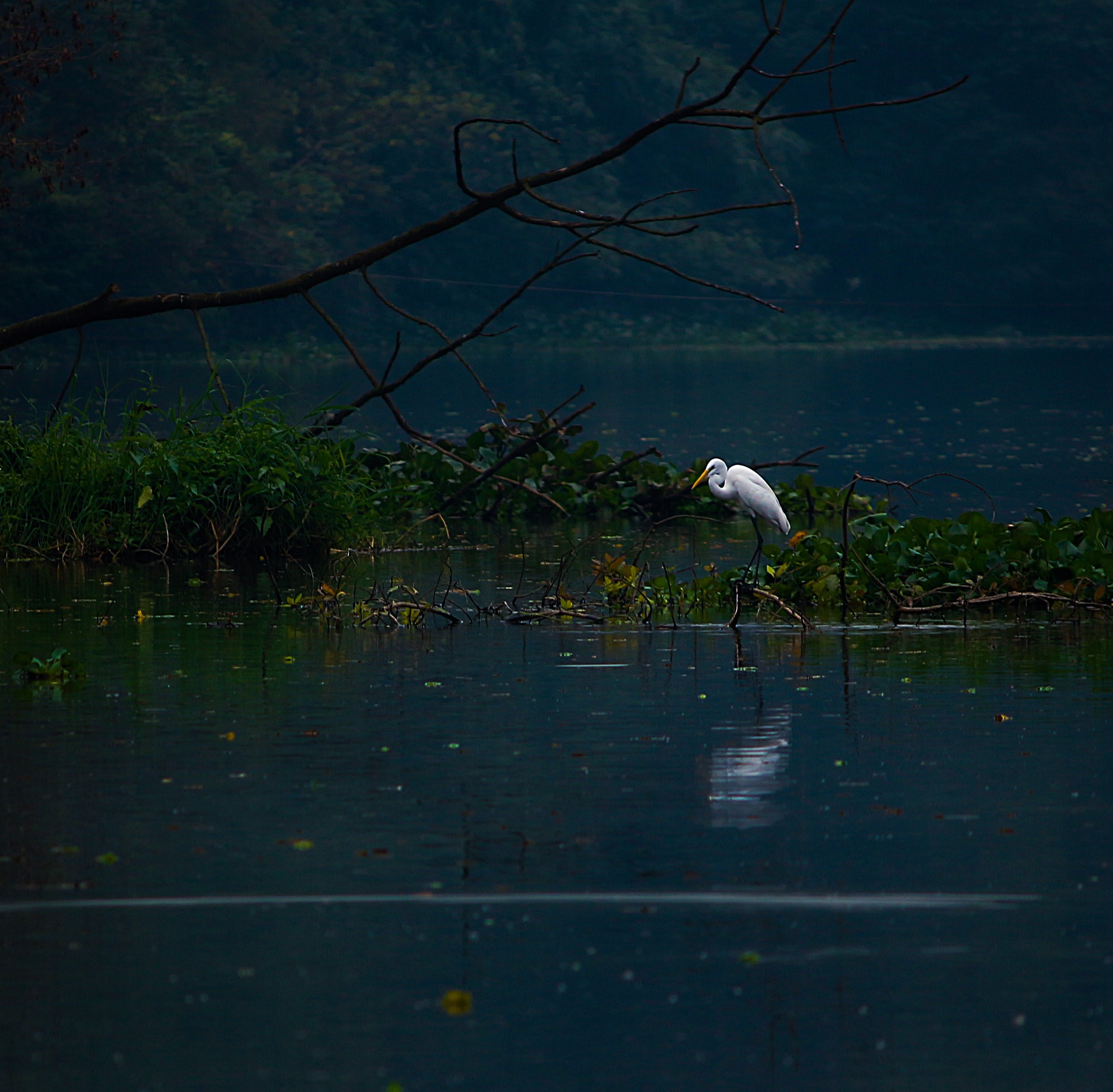 Photo of a Heron on Body of Water
