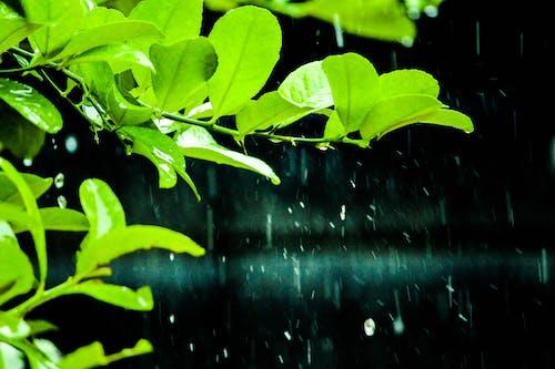 doğal, yağmak içeren Ücretsiz stok fotoğraf