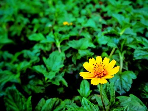 çiçek, doğal içeren Ücretsiz stok fotoğraf