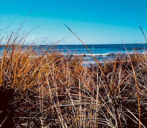Fotobanka sbezplatnými fotkami na tému divoké trávy, modrá obloha, modrá voda, nárazy vĺn