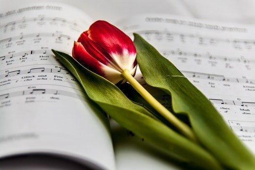 Red and White Flower on Music Note