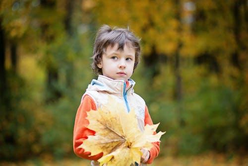 Darmowe zdjęcie z galerii z chłopak, drzewa, dziecko, liść klonu