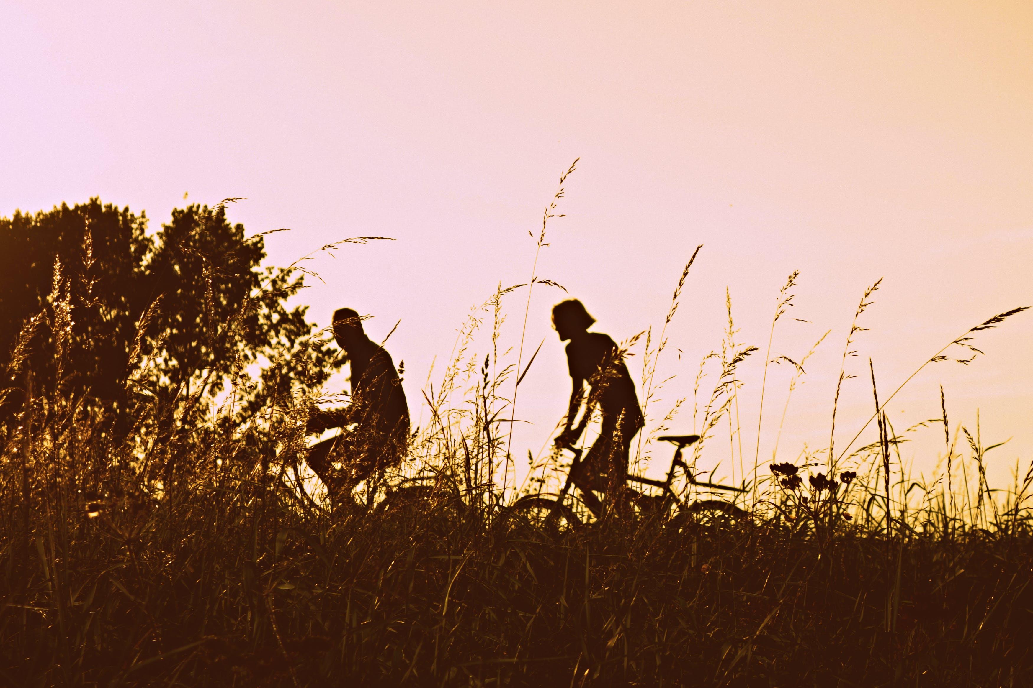 Free stock photo of nature, sunset, people, summer