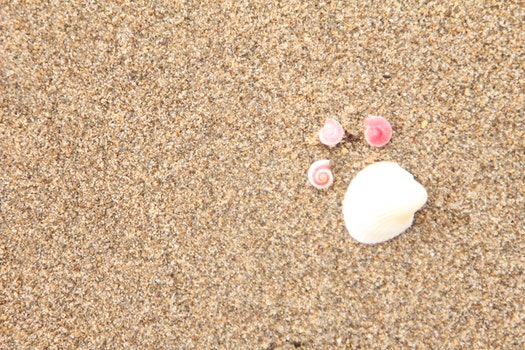 Free stock photo of seashell