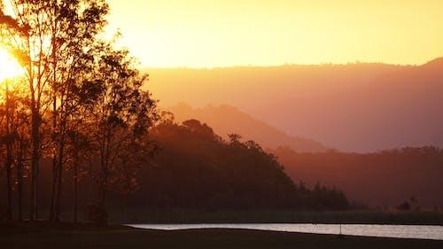 Photos gratuites de arbres, ciel orange, coucher de soleil, forêt