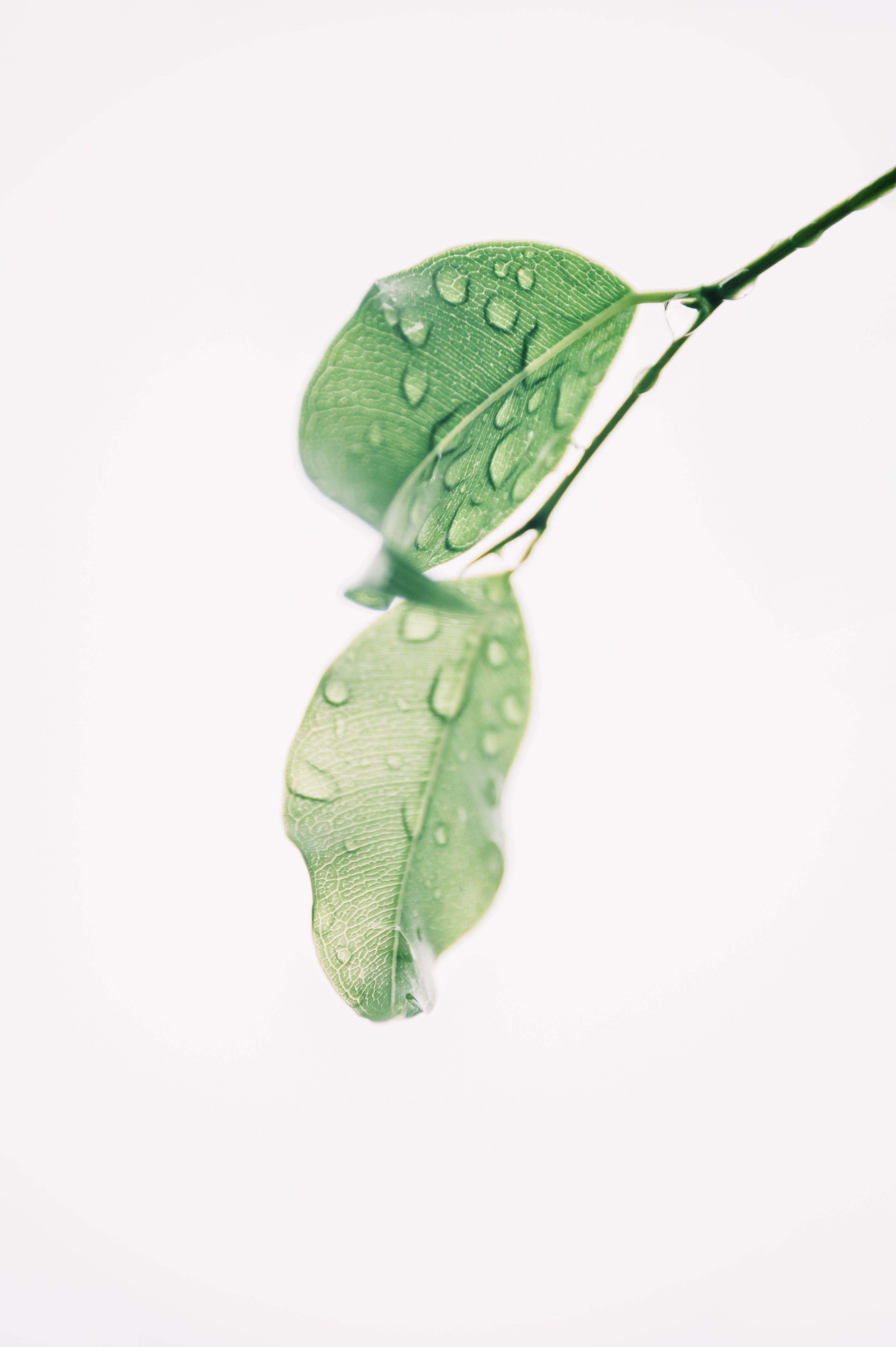 คลังภาพถ่ายฟรี ของ H2O, การเจริญเติบโต, ความสด, ชื้น