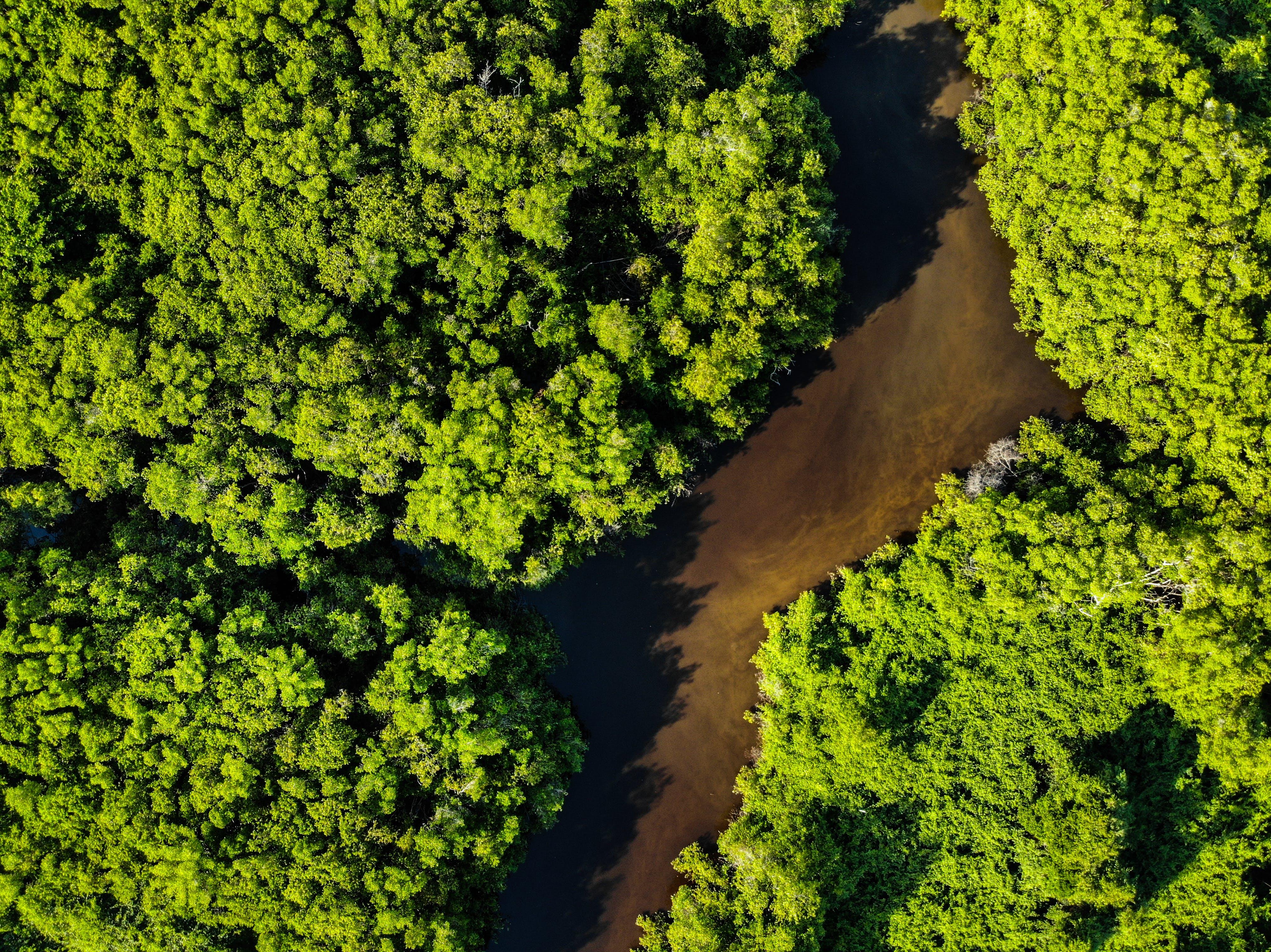 Immagine gratuita di alberi, boschi, brasile, da sopra