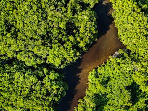 Δωρεάν στοκ φωτογραφιών με paraiba, από πάνω, Βραζιλία, δασικός