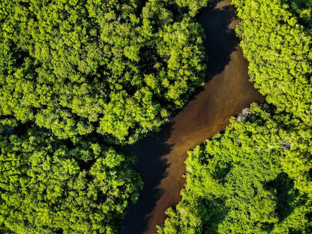 Fotos de stock gratuitas de arboles, bosque, Brasil