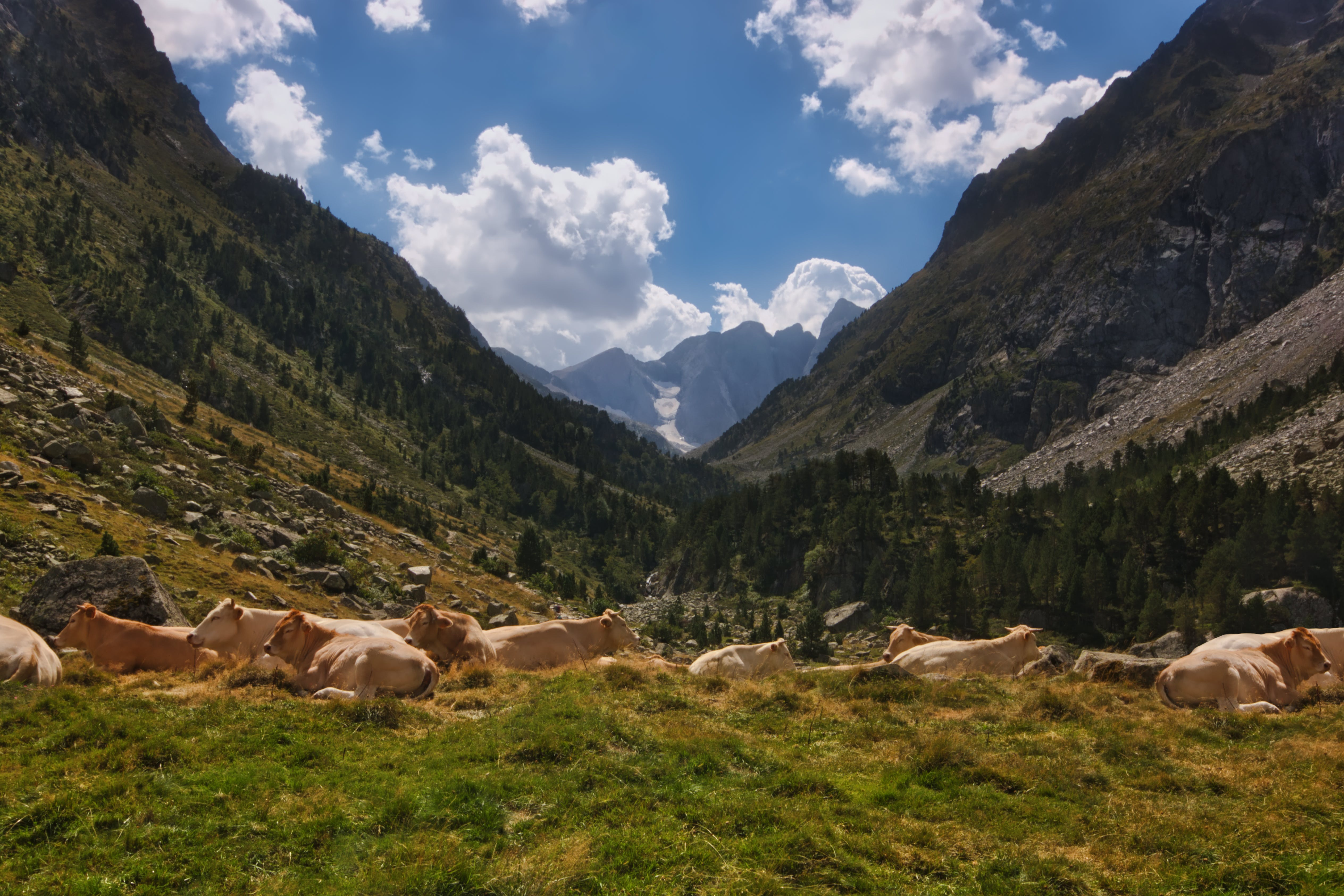 Photo of Brown Cattle On Mountain