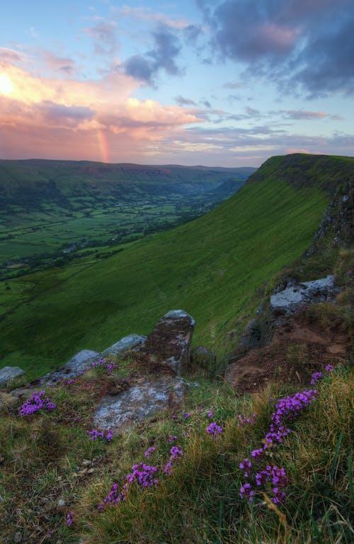 Gratis arkivbilde med blomster, fjell, gress, gressmark