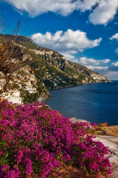 Gratis lagerfoto af bjerg, blå, blomster, bugt