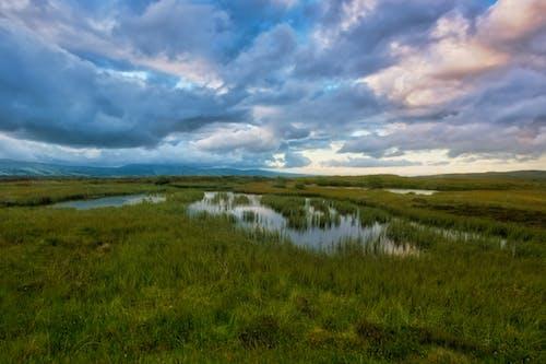 Immagine gratuita di acqua, ambiente, azienda agricola, campo