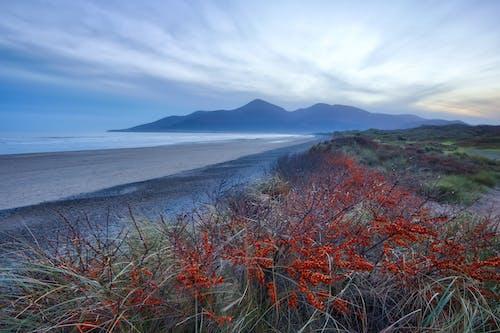 murlough, murlough海滩, 北爱尔兰, 县下来 的 免费素材图片
