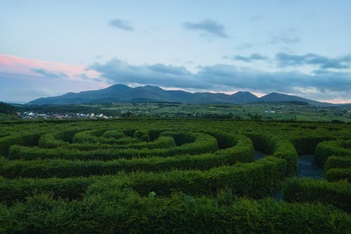 castlewellan迷宫, 北爱尔兰, 卡斯尔韦仑, 夏天 的 免费素材图片